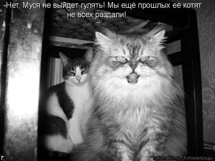 Котоматриця!)))) - Страница 2 Kotomatrix_41