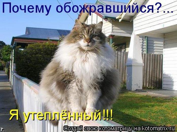 Котоматриця!)))) - Страница 2 Kotomatrix_42