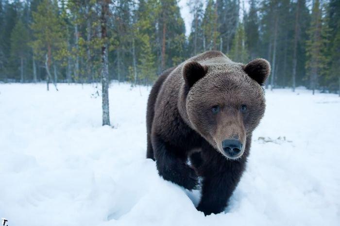 Жизнь медвежьей семьи (20 фото)