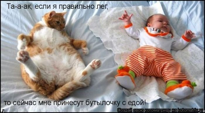 Лучшие котоматрицы 2009 года (50 фото)