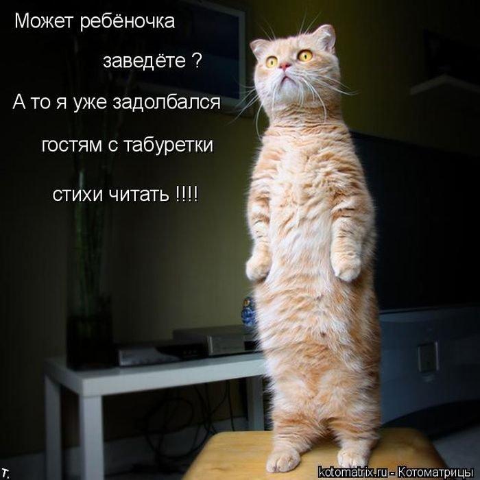 Котоматриця!)))) Kotomatrix_32