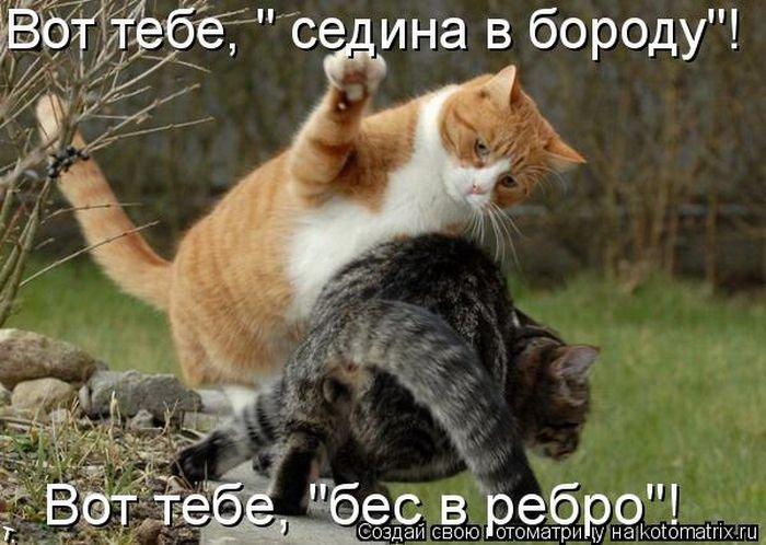 Котоматриця!)))) Kotomatrix_36