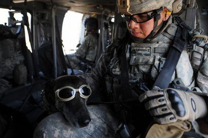 Собаки на службе в армии (21 фото)