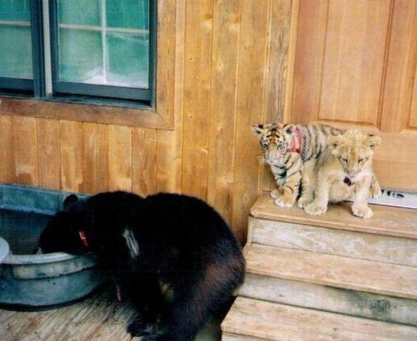 Животная дружба (17 фото)