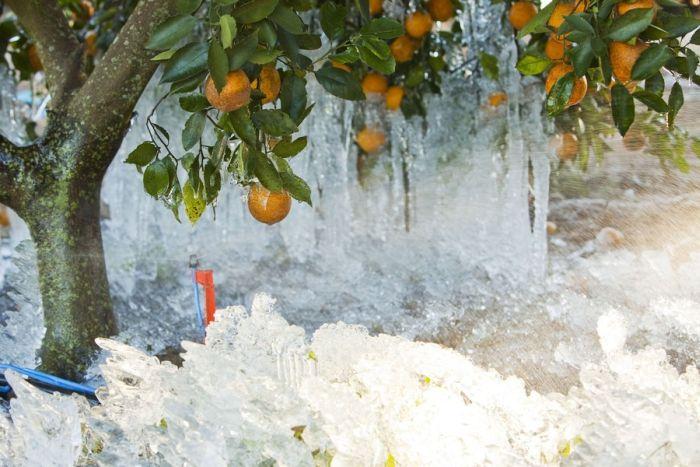 Снег во Флориде (12 фото)