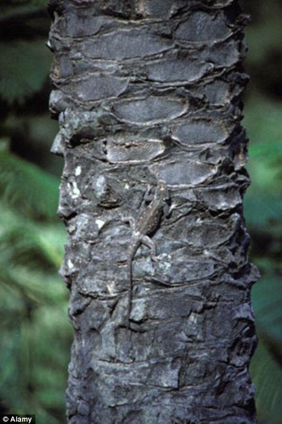 Природный камуфляж (21 фото)