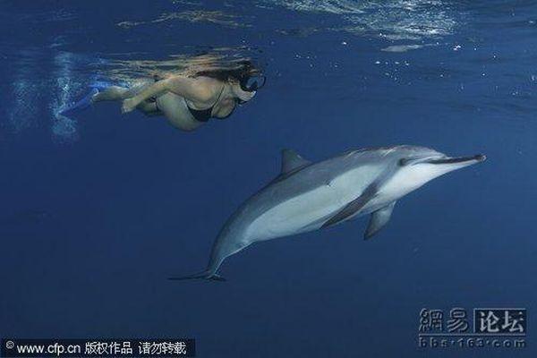 Фото беременная и дельфин