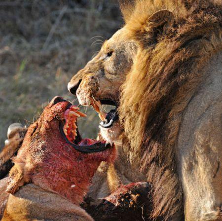 Хищник и жертва (20 фото)