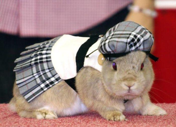 Модный показ одежды для кроликов (12 фото)