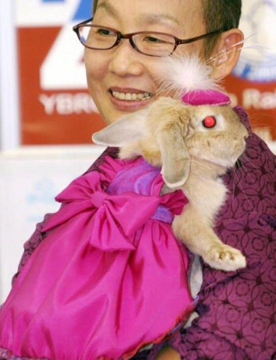 Одежда для кроликов своими руками фото
