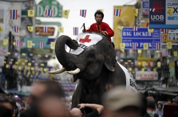 Тайский слон