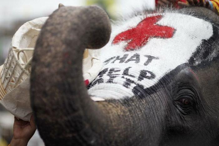 Помощь для Гаити (7 фото)