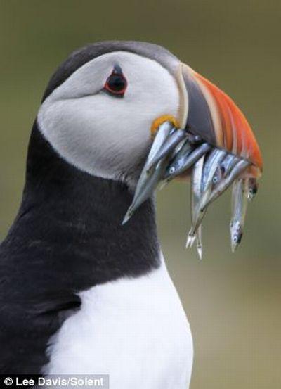 Ограбление по-птичьи (3 фото)