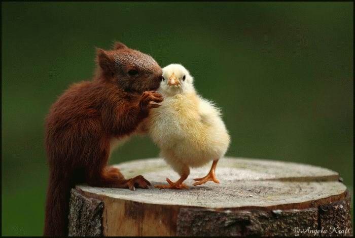 http://ru.trinixy.ru/pics4/20100128/unlikely_animal_friendships_01.jpg