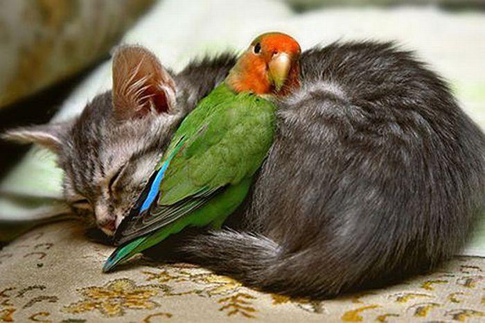 http://ru.trinixy.ru/pics4/20100128/unlikely_animal_friendships_02.jpg