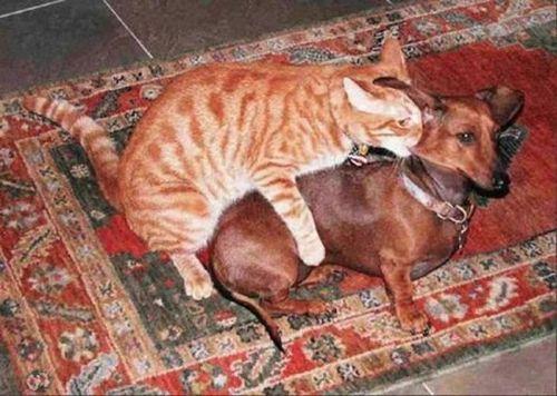 Невероятная дружба (50 фото)