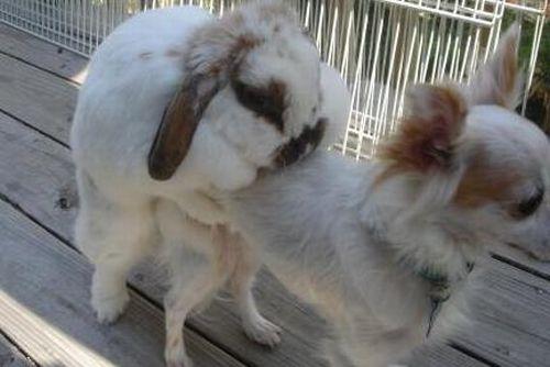 http://ru.trinixy.ru/pics4/20100128/unlikely_animal_friendships_05.jpg