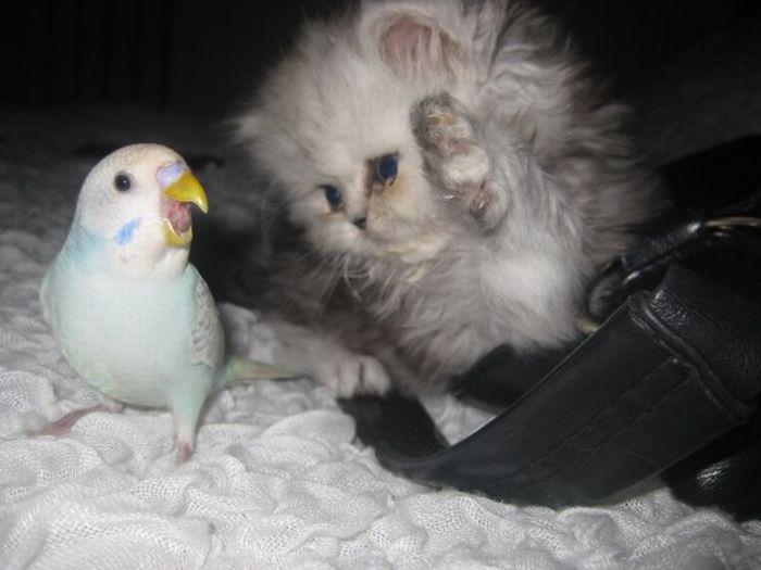 http://ru.trinixy.ru/pics4/20100128/unlikely_animal_friendships_07.jpg