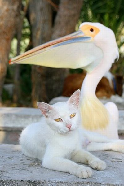 http://ru.trinixy.ru/pics4/20100128/unlikely_animal_friendships_09.jpg