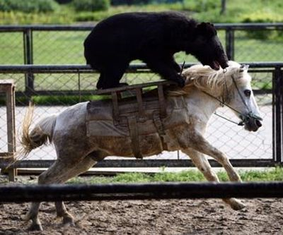 http://ru.trinixy.ru/pics4/20100128/unlikely_animal_friendships_10.jpg