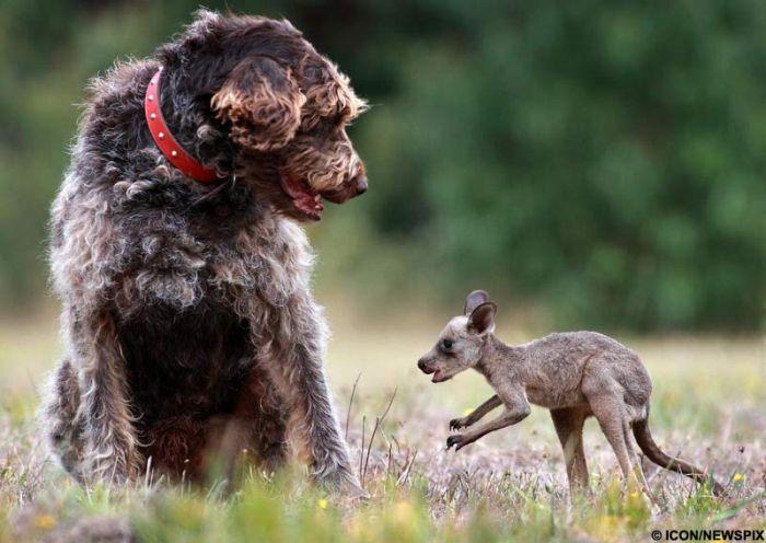 http://ru.trinixy.ru/pics4/20100128/unlikely_animal_friendships_11.jpg