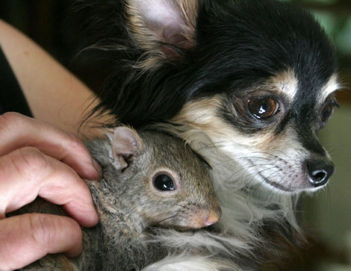 http://ru.trinixy.ru/pics4/20100128/unlikely_animal_friendships_12.jpg