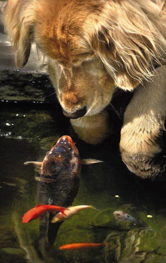 http://ru.trinixy.ru/pics4/20100128/unlikely_animal_friendships_14.jpg