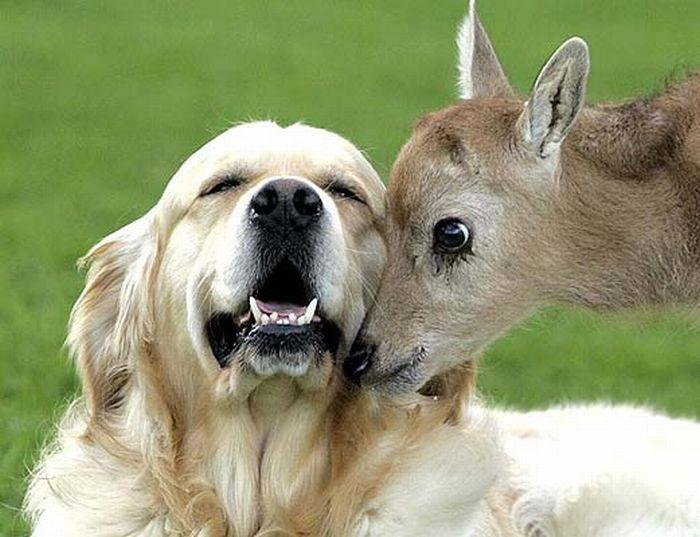 http://ru.trinixy.ru/pics4/20100128/unlikely_animal_friendships_16.jpg