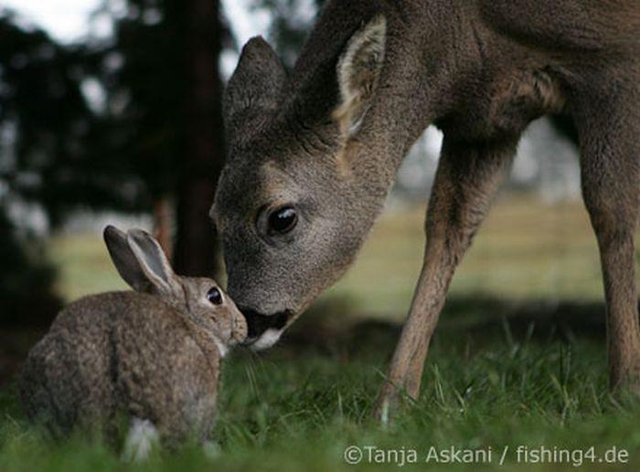 http://ru.trinixy.ru/pics4/20100128/unlikely_animal_friendships_17.jpg