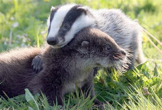 http://ru.trinixy.ru/pics4/20100128/unlikely_animal_friendships_19.jpg