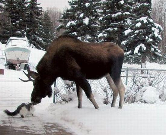 http://ru.trinixy.ru/pics4/20100128/unlikely_animal_friendships_20.jpg