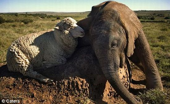 http://ru.trinixy.ru/pics4/20100128/unlikely_animal_friendships_21.jpg