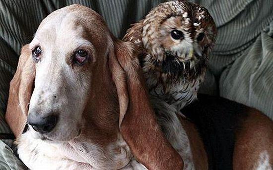 http://ru.trinixy.ru/pics4/20100128/unlikely_animal_friendships_22.jpg