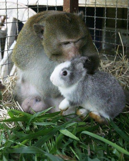 http://ru.trinixy.ru/pics4/20100128/unlikely_animal_friendships_24.jpg