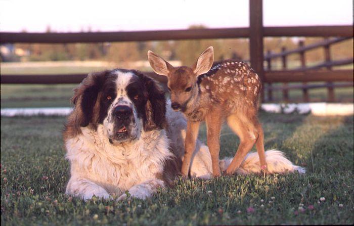 http://ru.trinixy.ru/pics4/20100128/unlikely_animal_friendships_26.jpg
