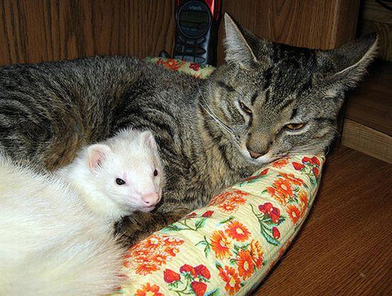 http://ru.trinixy.ru/pics4/20100128/unlikely_animal_friendships_30.jpg