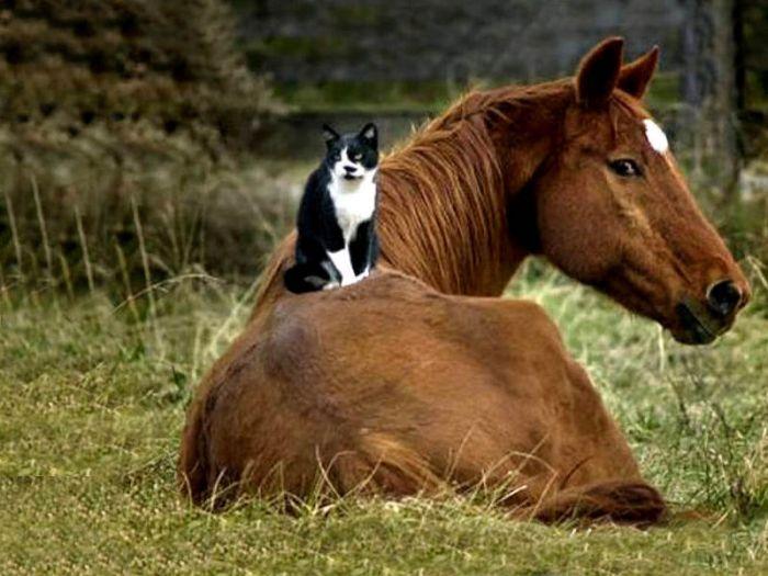 http://ru.trinixy.ru/pics4/20100128/unlikely_animal_friendships_31.jpg