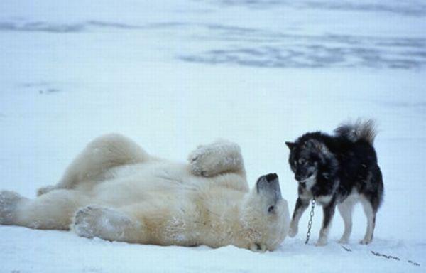 http://ru.trinixy.ru/pics4/20100128/unlikely_animal_friendships_32.jpg