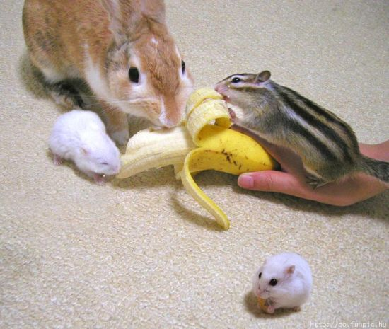 http://ru.trinixy.ru/pics4/20100128/unlikely_animal_friendships_34.jpg