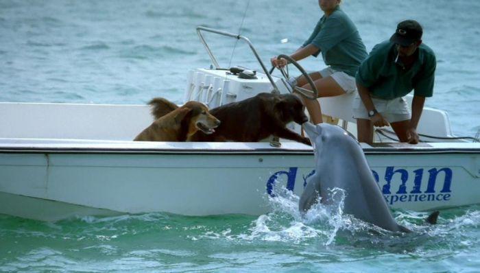 http://ru.trinixy.ru/pics4/20100128/unlikely_animal_friendships_35.jpg