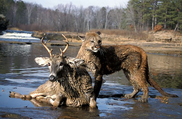http://ru.trinixy.ru/pics4/20100128/unlikely_animal_friendships_40.jpg