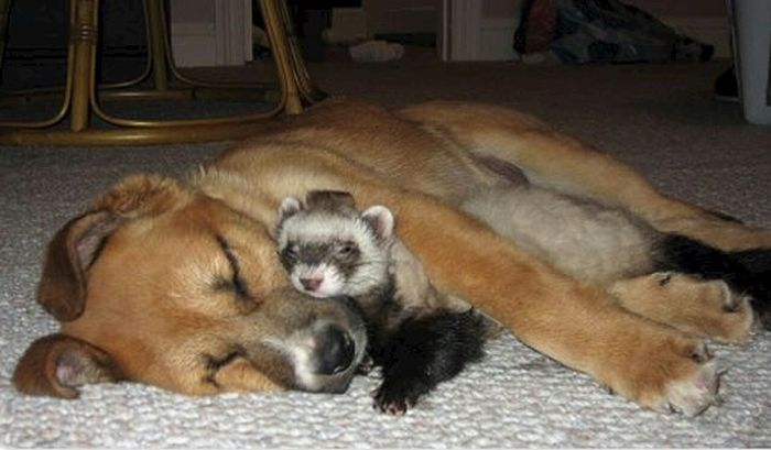 http://ru.trinixy.ru/pics4/20100128/unlikely_animal_friendships_41.jpg