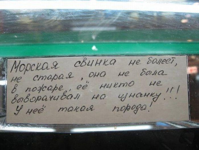 http://de.trinixy.ru/pics4/20100129/fun_write_10.jpg