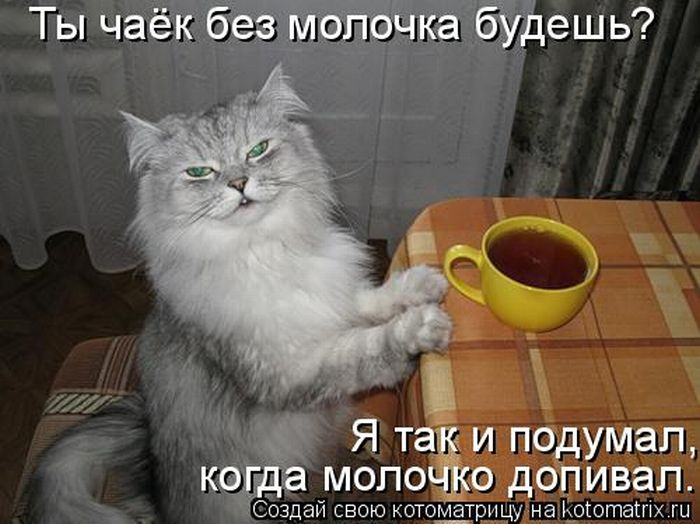 """Лучшие котоматрицы недели (50 фото)  """" Развлечения Ивана!"""