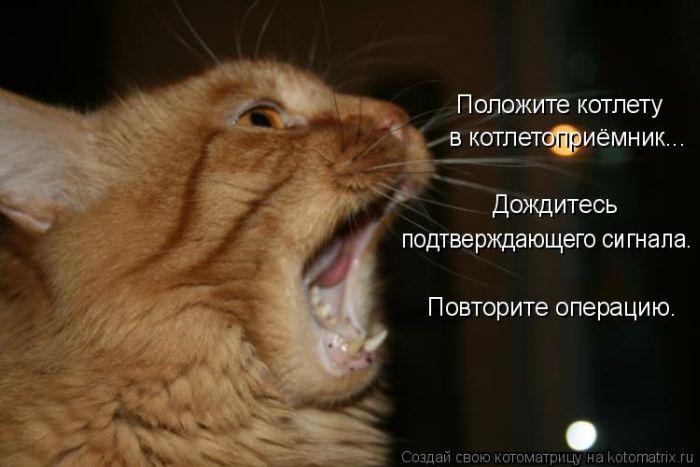 Котоматриця!)))) Kotomatrix_35