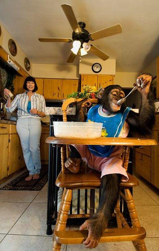 Необычные домашние животные (17 фото)