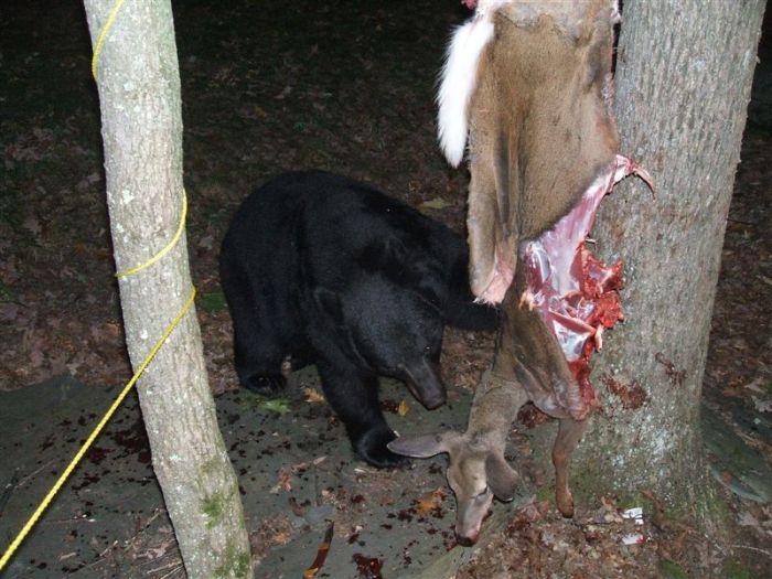 Неудача охотника (7 фото)