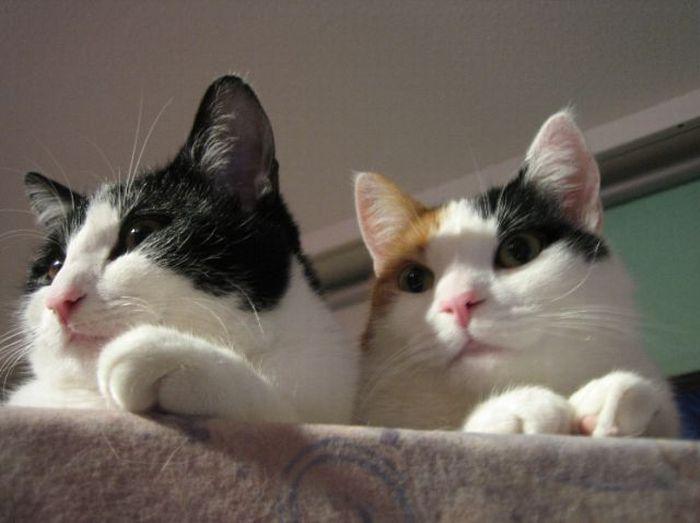 Приколы коты скачать картинки