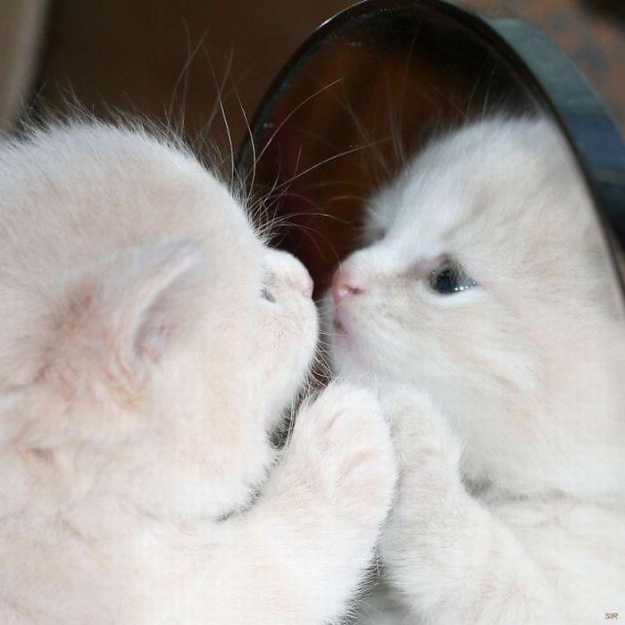 фото с надписью люблю котиков целью полета хакасскую