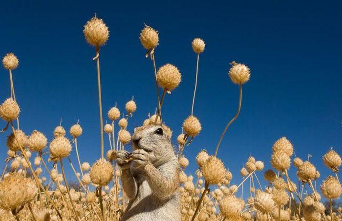 Славные суслики (20 фото)